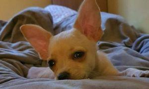 Povestea câinelui prins fără PAȘAPORT și salvat de la moarte de Jean Claude van Damme