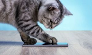 Aplicația care TRADUCE mieunatul pisicilor. Cum funcționează