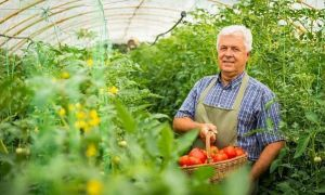 Ministrul Agriculturii CRITICĂ Programul Tomata inițiat de Petre Daea. Ce ajutoare se promit acum agricultorilor