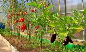 VEȘTI BUNE pentru legumicultori! Cum puteți primi o subvenție de 2.000 de euro de la Ministerul Agriculturii