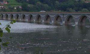 Dezastru ecologic pe râul Bicaz: Toți peștii au murit după poluarea cu amoniac!