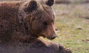 Prima reacție a premierului Cîțu după ÎMPUȘCAREA ursului Arthur