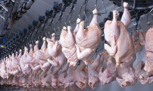 INVESTIGAȚIE pe piața producției și comercializării cărnii de pasăre. UCPR și alte nume mari sunt vizate