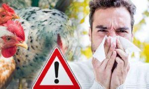 Controale la toate fermele de păsări din țară. FOCAR de gripă aviară