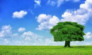 Studiu: Care sunt județele cu cel mai curat aer din România
