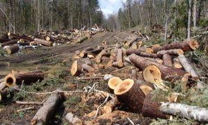 Europarlamentar USR-PLUS: România pierde 3 hectare de pădure pe oră