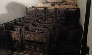 Aproape 1,2 tone de trufe negre, în valoare de 600.000 de lei, confiscate de poliţiştii din Neamţ de la un cetățean italian