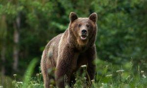 Poveste ruptă din filme: Un bărbat care locuia în sălbăticie s-a luptat timp de o săptămână cu un urs grizzly. Cum a reușit să scape