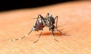 Care sunt simptomele provocate de virusul West Nile