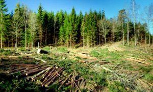 România exportă din ce în ce mai mult lemn de la un an la altul. Câte zeci de milioane de metri cubi am exportat în 2020?